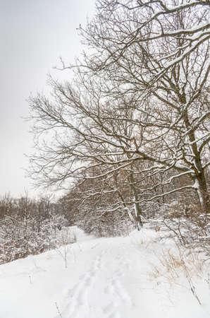 winter road: Winter road on hill