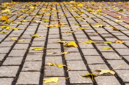 hojas antiguas: Autumn in the Park. Autumn background. yellow leaves on the road Foto de archivo