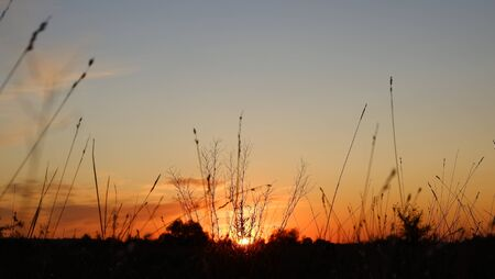 Heppy new day: silhouette of grass flower on sunset background Banque d'images