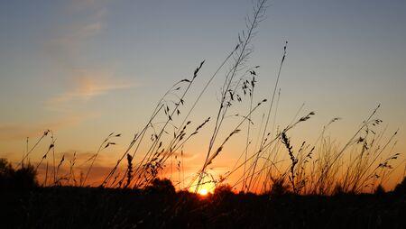 Felice nuovo giorno: silhouette di fiori d'erba sullo sfondo del tramonto