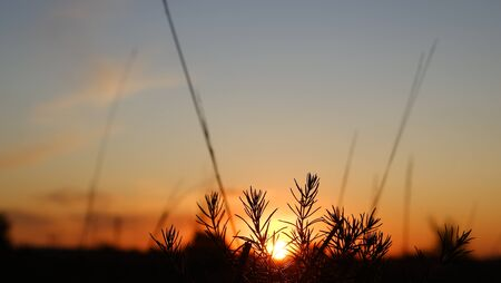 Heppy new day: silhouette of grass flower on sunset background 写真素材