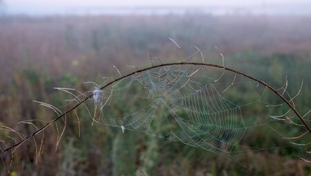 Spider web with dew drops closeup at summer morning sunrise, river Vorskla, Ukraine