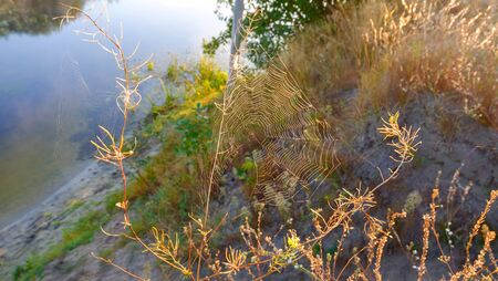 Spiderweb with sun and trees reflecting off water at summer sunset, river Vorskla, Ukraine 写真素材