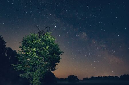 Beautiful night sky over forest landscape, Milky Way and trees 写真素材