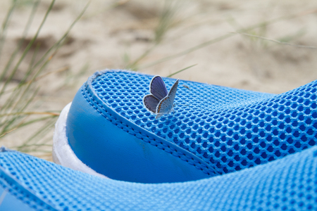 sossusvlei: Butterfly sitting on sneakers blue color in the desert.