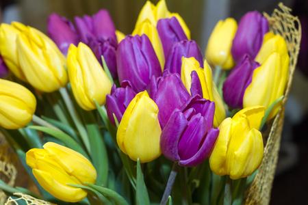 Beautiful tulips on Canadian Tulip Festival in Ottawa Stock Photo
