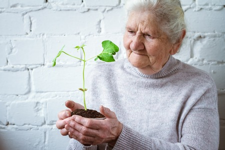 World Environment Day, an old woman holding a green sprout. Background or concept, save the planet, grow new, transfer experience. Free space for text. Banque d'images - 119186946