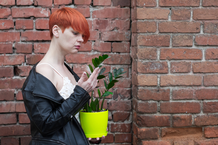 A middle-aged woman in a white dress holding a plant pot zamiokulkas in her hands against the background of a red brick wall, the concept of the film Amelie . Stockfoto