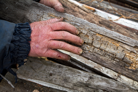 The hands of an old man with sick nails choose old boards for heating the farm, life beyond poverty 版權商用圖片