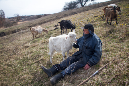 An old man in messy clothes is sitting on a hill and herding a flock of his own goats against the backdrop of withered nature.