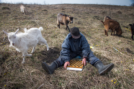 An old man in messy clothes sits on a hill playing chess, grazing a flock of his own goats against the backdrop of a withered nature Stock Photo