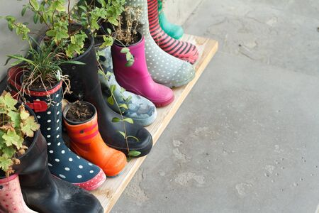 Multi-colored rubber boots as flower pots with different blooming flowers on the veranda, concept of ecology
