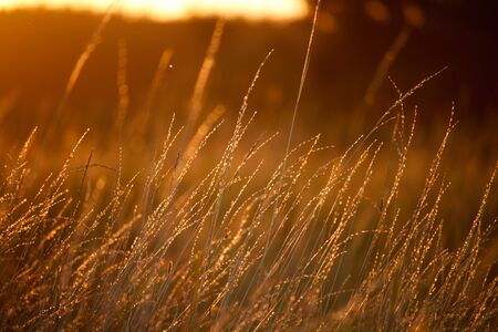 Landscape with a meadow of grass against the backdrop of a sunset, bright orange sun, soft focus