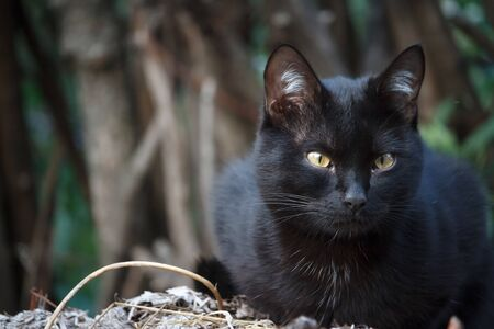 Closeup black shorthair cat with yellow eyes sits on the roof of the shed and carefully looks around Stockfoto