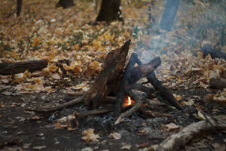Close up of a burning bonfire in the forest, firewood and embers on fire in the autumn forest, selective focus