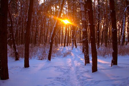 Sunset in a snowy forest, path in the snow and the rays of the sun through the branches of trees, selective focus Stock Photo