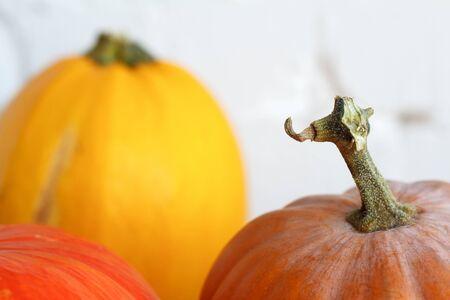 Sluit herfstpompoenen op Thanksgiving-tafel, witte bakstenen achtergrond, selectieve focus Stockfoto