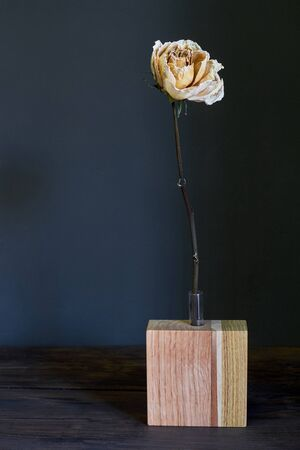 Beautiful beige dry rose in wooden vase on a dark background, selective focus 스톡 콘텐츠
