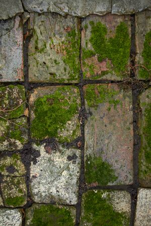 An old stone path in the moss after the rain, selective focus