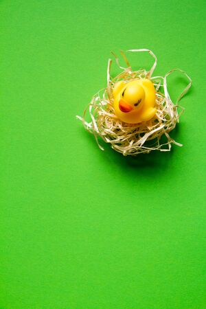 Top view of yellow rubber duck in a straw nest on green background, minimalistic easter concept or background