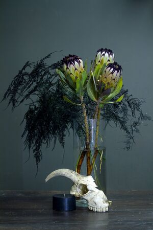 Still life with bouquet of protea, black candle and a goat skull on a dark background, selective focus Stok Fotoğraf