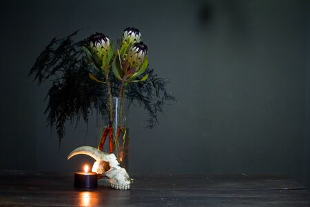 Still life with bouquet of protea, black burning candle and a goat skull on a dark background, selective focus
