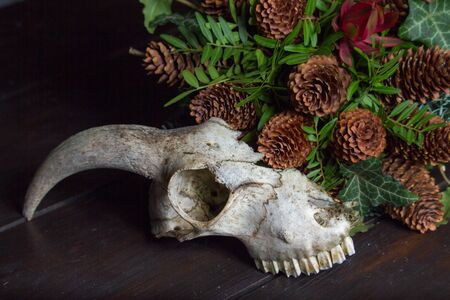 Close up of an animal skull next to a bouquet on a wooden tabletop, selective focus Stock Photo