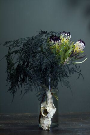 Still life with bouquet of protea and a goat skull on a dark background, selective focus