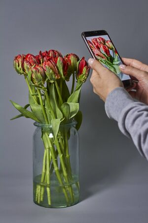 Woman takes photo of red tulips bouquet in glass vase on her smartphone. Beautiful tulips flower for postcard beauty and design. Archivio Fotografico