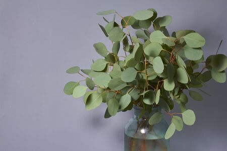 Branches of eucalyptus in vase on table on grey background. Home decor. Blog, website or social media concept.