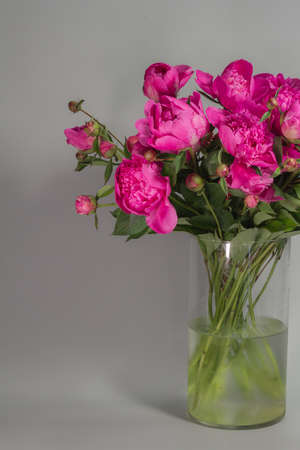 Bouquet of pink peonies in glass vase on grey background, greeting card concept