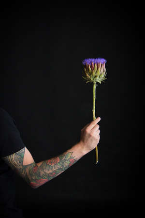 Male tattooed hand holding purple artichoke flower on black background, greeting card or concept
