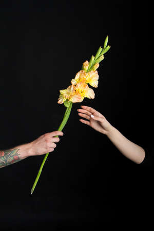 Male hand with tattoos giving yellow gladiolus flower to feminine girlish hand, greeting card or concept Stok Fotoğraf