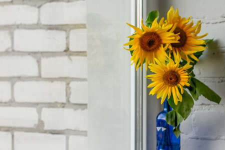 Bouquet of blooming sunflowers in blue glass vase on windowsill, selective focus Stok Fotoğraf