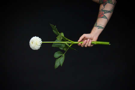 Male hand with fresh white fragile dahlia flower isolated on black background, greeting card