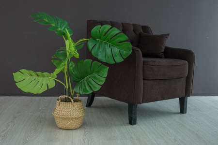 Soft brown velvet vintage armchair on wooden legs and green tropical plant in straw basket, stylish interior in dark colors, urban jungle, copy space