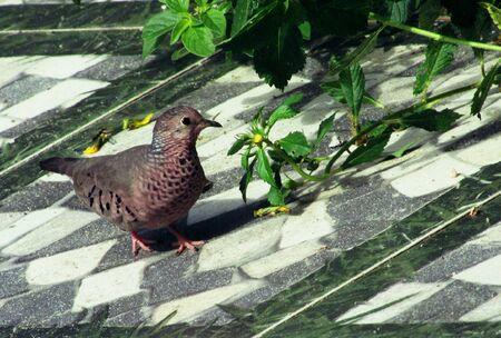 amazonian: Little bird with flower in the Amazonian garden Stock Photo