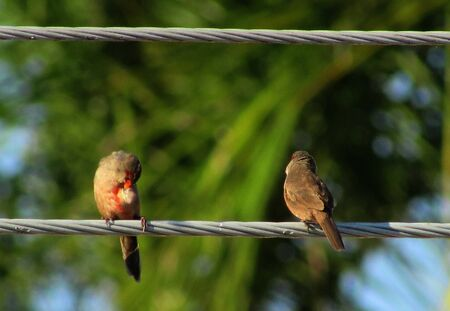 power cable: Couple of birds is perched on the power cable