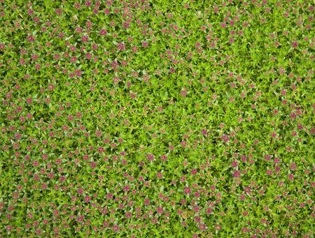 creeping: Creeping muschio giardino e fiori