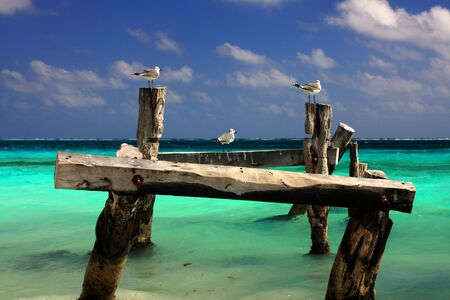 structure: Three seagulls on an old pier structure Stock Photo