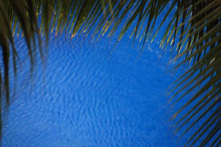 A view of palm tree leaves over blue water Stock Photo - 6327471
