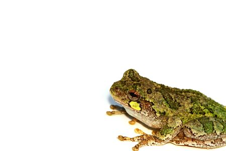 Cute tree frog on white, add your message Stock Photo - 7383962
