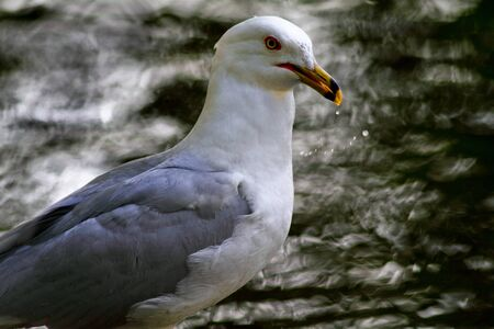 Profile of seagull standing by waterflow