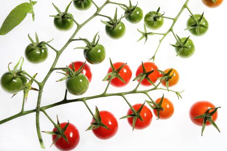 Background of red and green vine cherry tomatoes