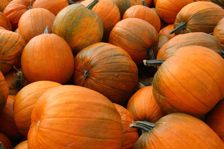 A view of a pumpkin harvest in the autumn Stock Photo