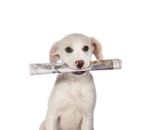 실험실 강아지 신문을 가져 오는