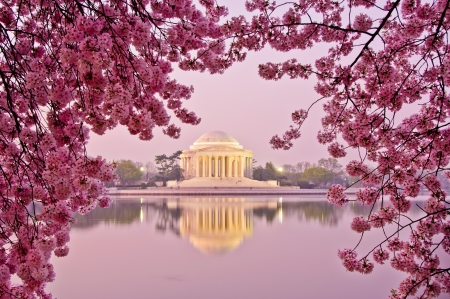 national landmark: Dawn al Jefferson Memorial durante il Cherry Blossom Festival di Washington, DC Archivio Fotografico