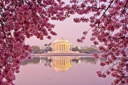 kersenbloesem: Dawn bij het Jefferson Memorial tijdens het Cherry Blossom Festival Washington, DC Stockfoto