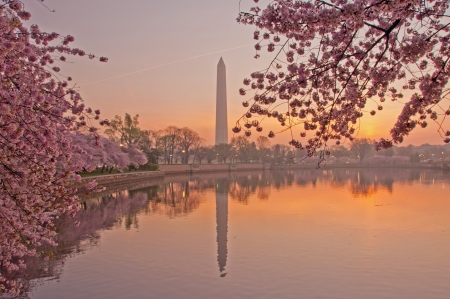 cerisier fleur: Cherry Blossom Festival sur le National Mall � Washington, DC Banque d'images