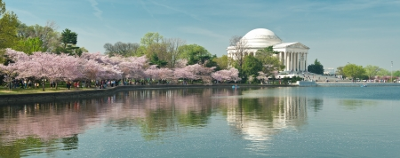 national monuments: Cherry Blossom Festival at the National Mall  Washington, DC